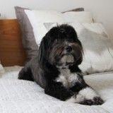10 réflexes à adopter pour accueillir un chien dans votre maison