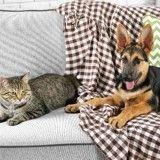 5 astuces pour bien choisir son revêtement de canapé quand on a des animaux