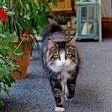 Comment aménager un «jardin d'hiver» pour son (pa)chat ?