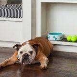 Comment aménager un coin repas pratique et design pour votre animal ?