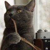 Conseils et astuces pour réussir les photos de vos animaux de compagnie