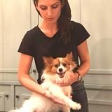 Nala et Malinka en reportage dans l'hôtel le plus dogfriendly de Paris