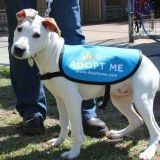 Des chiens de refuge sauvent des humains en les emmenant se promener !