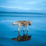 Les sublimes photos de deux Huskies jouant sur un lac gelé