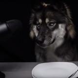 Ce chien goûte à des fruits exotiques dans une vidéo ASMR insolite (Vidéo)