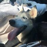 Elle refuse que la chienne accouche au refuge et la met dans sa voiture, quand soudain…