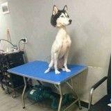 La photo de ce Husky tondu devient virale !
