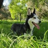 Il voit une couverture par terre dans un parc : son chien la renifle et des pleurs se font entendre !