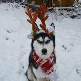 Elle veut faire des photos de Noël avec son chien, le résultat est hilarant