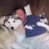 Ce Husky serait-il le chien le plus jaloux du monde ? (Vidéo du jour)