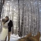 Quand un chien filme le mariage de ses maîtres