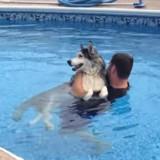 Il emmène son chien paralysé à la piscine, ce qu'il se passe ensuite fait pleurer le monde entier (Vidéo)