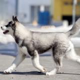 Un chien meurt en prenant l'avion d'Amsterdam à Los Angeles