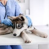 COVID-19 : les cliniques vétérinaires ne sont plus en libre accès