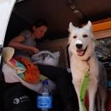 [Road trip] Voyager avec son Berger Blanc Suisse, première étape