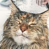 10 chats prêts à tout pour s'hydrater