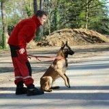 Icare, ce chien pompier qui a sauvé deux vies en quinze jours