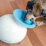 iFetch, le robot qui joue avec votre chien à votre place