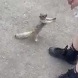 Un petit écureuil assoiffé s'approche d'un groupe d'humains, 4 millions de personnes sont émues (vidéo)