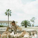 Okunoshim, l'île aux milliers de lapins (Photos et vidéo)