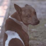 Transformer les chiens errants en chiens de police, le grand projet de New Delhi