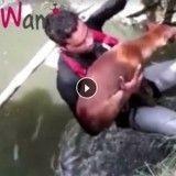 Une association vole au secours d'une chienne en train de se noyer