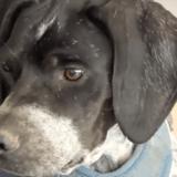 Elle promène son chien dans un petit village, ce qu'elle voit arriver en courant lui brise le coeur (vidéo)