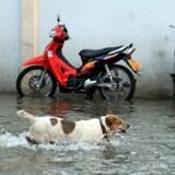 La Croix Rouge va bientôt pouvoir héberger les animaux de personnes sinistrées