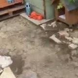 Tristes records de pluies dans le Gard : le refuge est inondé et les sauveteurs doivent agir de toute urgence (vidéo)