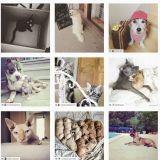 Les plus belles photos d'animaux de compagnie sont maintenant sur Instagram !