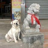 Loi interdisant de manger du chien et du chat en Chine : moins stricte que prévue