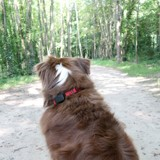 3 astuces pour ne pas perdre votre chien ou votre chat cet été