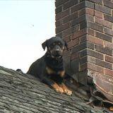 Un pompier sauve et adopte un chien bloqué pendant 3 jours sur le toit d'une maison