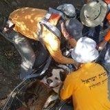 Opération sauvetage pour un chien brûlé aux pattes suite à une randonnée