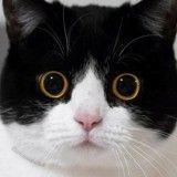 Découvrez Izzy et Zoë, les chattes les plus expressives du Web