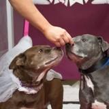 Ce refuge a organisé un mariage entre deux chiens