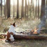 Un chien héroïque sauve sa famille d'un incendie : malheureusement, l'histoire se transforme en tragédie
