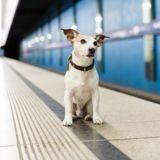 La ligne 13 du métro parisien fortement perturbée par un chien sur les voies (Vidéo)