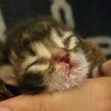 Ce minuscule chat trouvé sous un jacuzzi est devenu un magnifique matou (Photos)