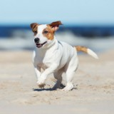 Sa chienne se baigne dans la mer, un an après elle reçoit une amende et s'indigne