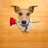 Ce restaurant organise une journée spéciale St Valentin pour les chiens célibataires !