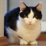 Une chatte sauve in extremis la vie de son maître