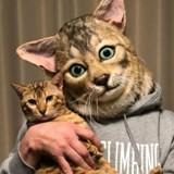 Mardi Gras : il est possible de créer un masque à partir de la tête de votre chat (mais c'est un peu flippant) !
