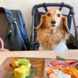 Ce restaurant japonais propose aussi de faire à manger pour votre chien !