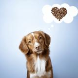 Alimentation sur-mesure : Japhy propose des aliments de qualité et adaptés aux spécificités de chaque chien