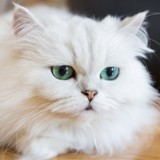 Les propriétaires de ce chat perdu vont traverser la France pour le retrouver ! (Vidéo)