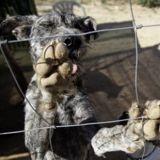 Yulin : Michel Sardou et Jean-Marie Bigard disent NON au festival de la viande de chien en Chine