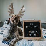 Après Noël, des chiots reçus en cadeau se font déjà vendre sur Internet