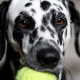 Bien jouer avec son chien pour développer son intelligence et lui éviter de s'ennuyer