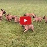 L'adorable moment de jeu entre une chienne et ses petits (Vidéo du jour)